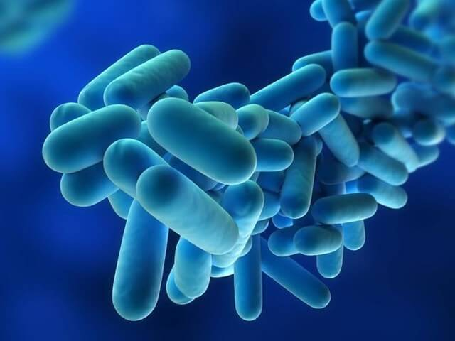 Legionnaires' Disease: A Fatal Pneumonia Contracted From Water