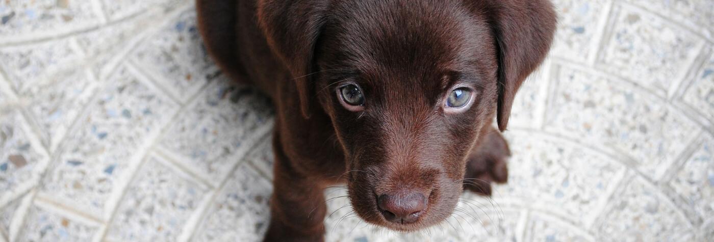 Aspergillosis in Dogs